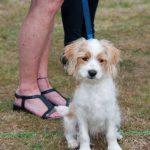 Eddie - the team dog